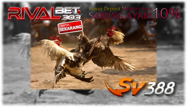 Mengenal Adu Ayam Sv388 Rivals128 (Recommended)
